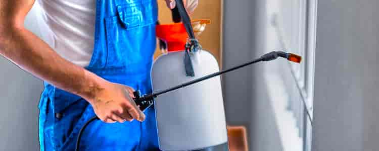 Best Pest Control Springfield Lakes
